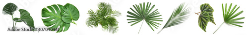 Wall mural Set of green tropical leaves on white background