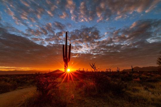 Lone Cactus At Sunrise Near Hiking Trail in North Scottsdale, AZ