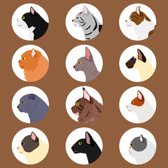 set of cats profile