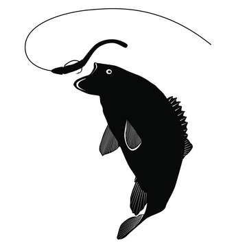 A vector silhouette of a smallmouth bass attacking a fishing lure.