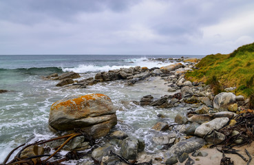 Rocky coast with giant seaweed tubes and bladderwrack, wild ocean at Buffels Bay, Cape Point Nature Reserve, Western Cape Peninsula, Cape Town, South Africa