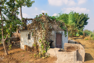 Abandoned exotic white stones bricks rocked hut with rusted iron door and window with tropical green plants on roof, surrounded by big trees at Egyptian village on sunny day