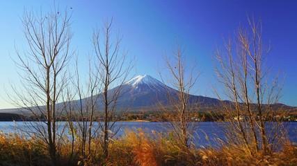 Wall Mural - Mountain fuji with grass foreground, Kawaguchiko Lake, Japan
