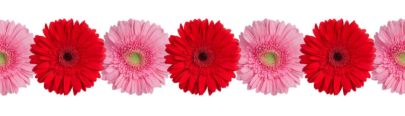Autocollant pour porte Gerbera Red and pink gerbera flowers border on white background isolated close up, gerber flower seamless pattern, greeting card decorative frame, floral ornamental line, daisies decoration, design element