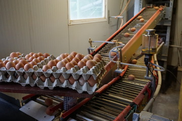 interior of an organic egg collecting factory