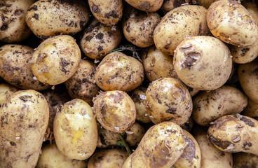 Natural potato colored background