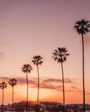 Encinitas, California palm trees at sunset