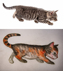 cuttel little cat - pencil and aquarelle picture and photo - model