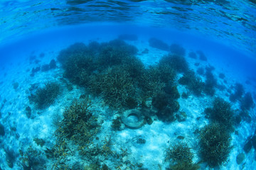 Fototapete - Marine pollution in the tropical coral reef