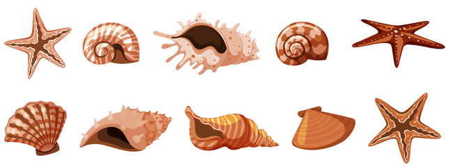 Set of isolated seashells in brown color