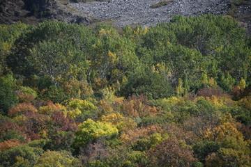 Printed kitchen splashbacks Khaki Colorful autumn landscape at the foot of the mountain