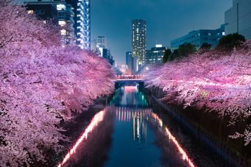 Fotobehang Kersenbloesem 目黒川の夜桜