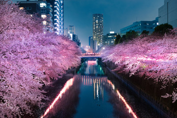 Foto op Plexiglas Kersenbloesem 目黒川の夜桜