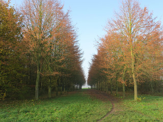 autumn landscape with a footpath through the woods to the horizon