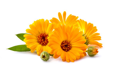 Foto op Canvas Madeliefjes Calendula. Flowers with leaves isolated on white background.