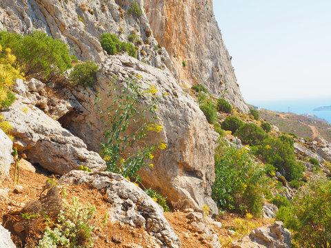 Wandern auf Kalymnos - Bergziege