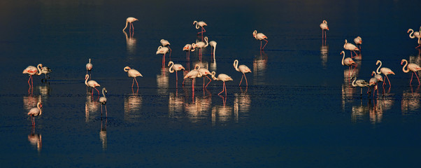 Photo sur Aluminium Flamingo Pink And Grey Flamingos At The Salt Lake Of Larnaca, Cyprus