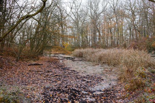 kleiner Bach im kalten, herbstlichen Wald