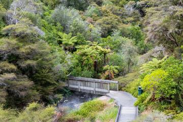 Rotorua Waimangu Volcanic Valley auf der Nordinsel von Neuseeland