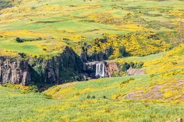 Waterfall in a hillside covered in wildflowers