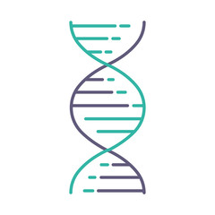 DNA double helix violet and turquoise color icon. Deoxyribonucleic, nucleic acid structure. Spiraling strands. Chromosome. Molecular biology. Genetic code. Genome. Isolated vector illustration