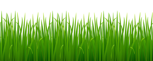 Vector seamless image of green realistic grass isolated on white. EPS 10