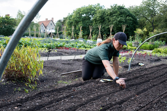 Woman kneeling in a vegetable bed, sowing seeds.