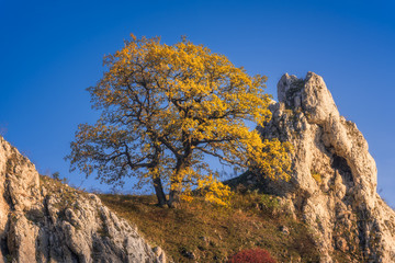 Lonely Tree on Rocky Hill of Palava Protected Area near Mikulov, South Moravia, Czech Republic