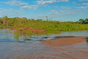 Pantanal Wetlands Panorama