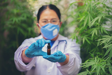 Researchers wearing medical gloves to extract hemp oil for medical use