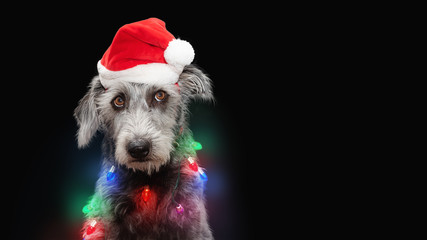 Funny Dog Wrapped in Christmas Lights