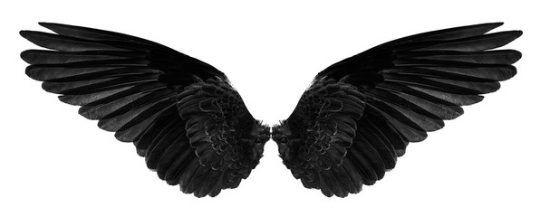 black bird's wings isolated on a white Wall mural