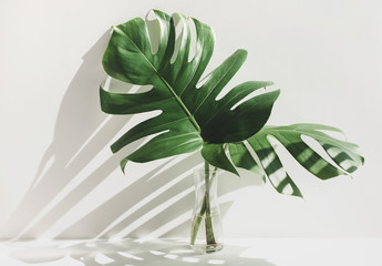 Monstera leaves in glass jug with sunlight and long shadow on wall