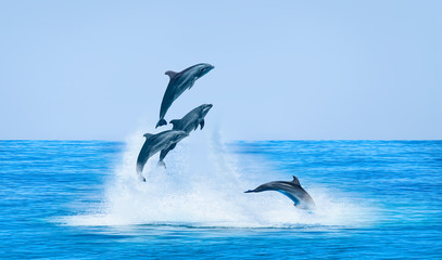 Foto auf Gartenposter Delphin Group of dolphins jumping on the water - Beautiful seascape and blue sky