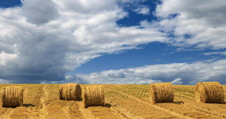 Wall Mural - Yellow haystacks, field wheat, blue sky with clouds. Beautiful dynamic landscape on Sunny day. Beauty nature, agriculture and seasonal harvest time. Scenic agricultural land.