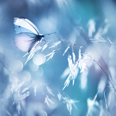 Fragile delicate butterfly on a field plant in delicate pink and blue colors. Square format.