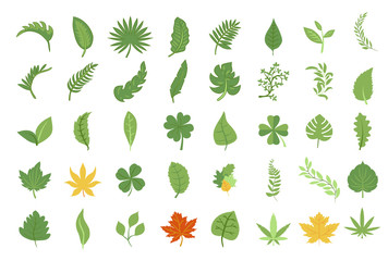 leaf vector set collection graphic design