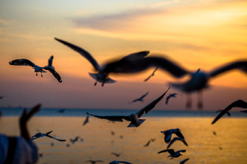 Recess Fitting Bird The blurred abstract background of the seagulls flying with the twilight light in the evening, and a multitude of birds on the branch while watching the evening.