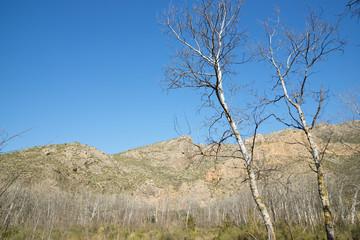 Winter forest in Spain.