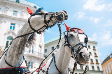 Keuken foto achterwand Wenen Traditional horse coach Fiaker in Vienna Austria