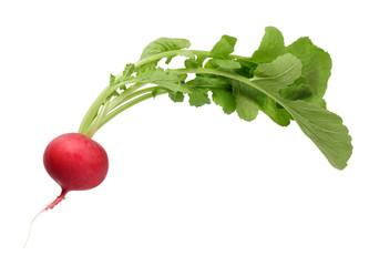 Fototapeta fresh radish with tops isolate on white obraz