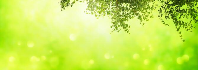 Foto op Plexiglas Zwavel geel unterm birkenbaum, abstrakter hintergrund