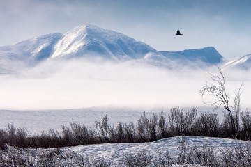 Foto auf Acrylglas Landschaft Winter mountain landscape with fog and snowy tundra. A black raven flies in the sky. Harsh Arctic nature. Golden Ridge, Chukotka, Siberia, Far East of Russia.