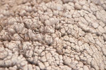Sad kulunda breeding sheep. Muzzle sharing. Meat and fur farm production. Animal wool. Closeup texture pattern