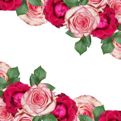Wall Mural - Beautiful floral background of pink and burgundy roses. Isolated