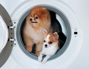 Dog puppie couple in washing machine with happy face curious eyes