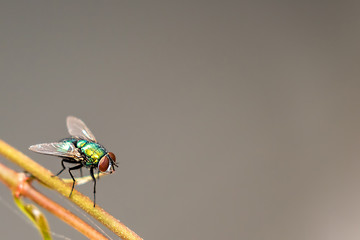 fly on a background
