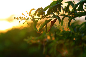 An image with a spider and its web on a tree branch, with a dramatic Florida sunrise in the background