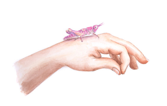 Watercolor painting hand with pink grasshopper