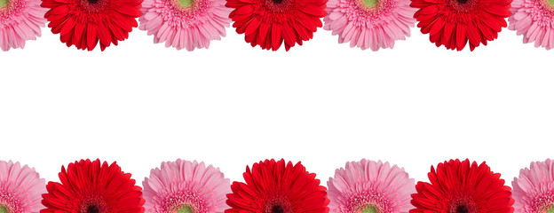 Fotorolgordijn Gerbera Red, orange and pink gerbera flowers border on white background isolated closeup, gerber flower seamless pattern, greeting card decorative frame, daisy floral ornament line, design element, copy space